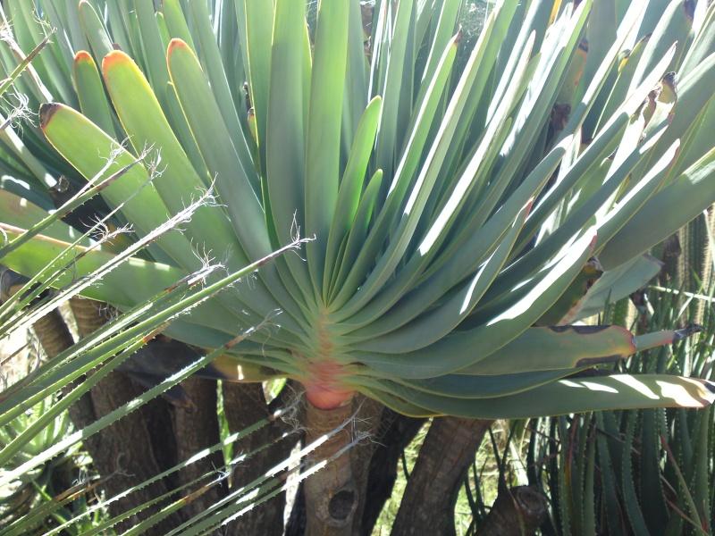 Trip to a Bendigo cactus garden. (Image heavy) Dsc00244