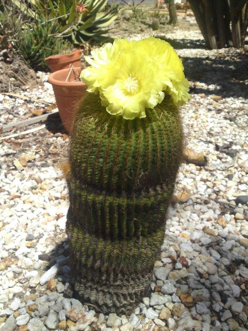 Trip to a Bendigo cactus garden. (Image heavy) Dsc00245