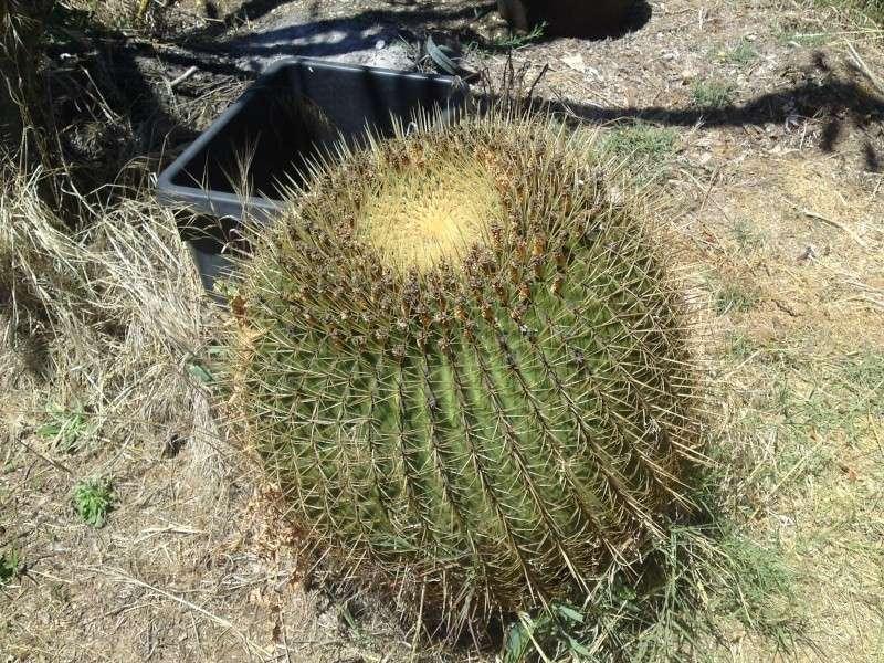 Trip to a Bendigo cactus garden. (Image heavy) Dsc00246