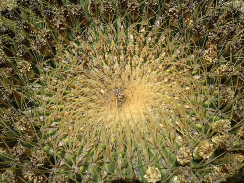 Trip to a Bendigo cactus garden. (Image heavy) Dsc00247
