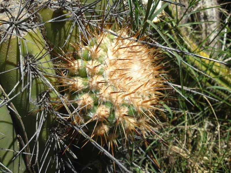 Trip to a Bendigo cactus garden. (Image heavy) Dsc00248