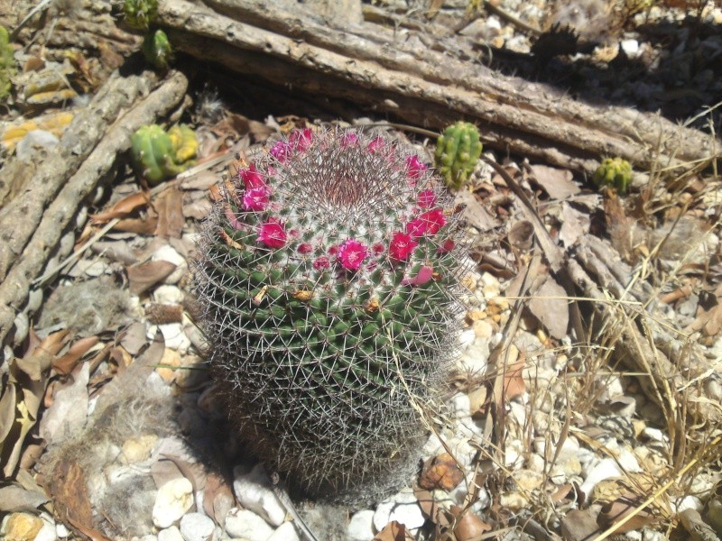 Trip to a Bendigo cactus garden. (Image heavy) Dsc00249