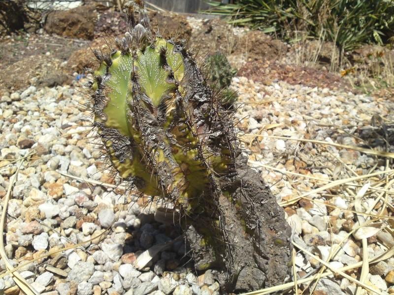 Trip to a Bendigo cactus garden. (Image heavy) Dsc00250