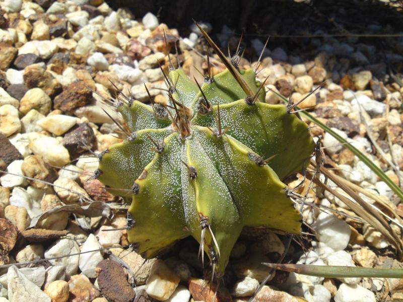 Trip to a Bendigo cactus garden. (Image heavy) Dsc00252