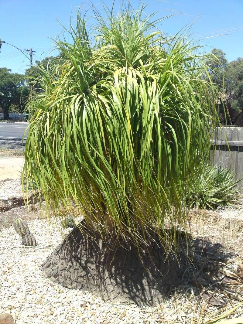 Trip to a Bendigo cactus garden. (Image heavy) Dsc00253