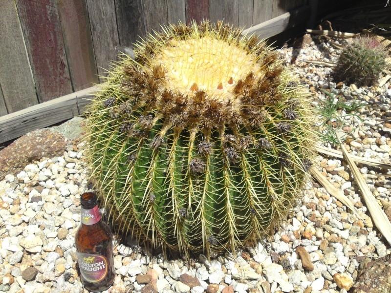 Trip to a Bendigo cactus garden. (Image heavy) Dsc00254