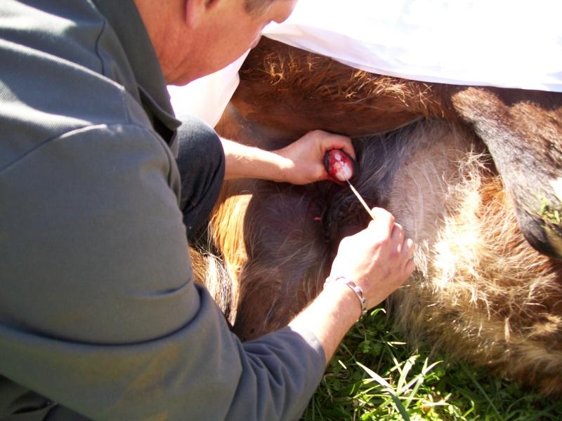 Castration, une seule testicule... Poupou est hongre, photos p2 - Page 2 100_1818