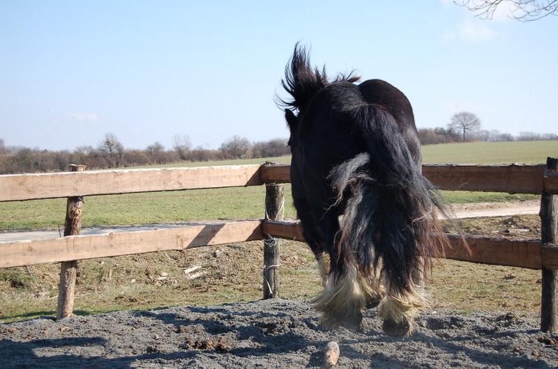 William: c'est la fête du cheveu !!! :) 2010_022
