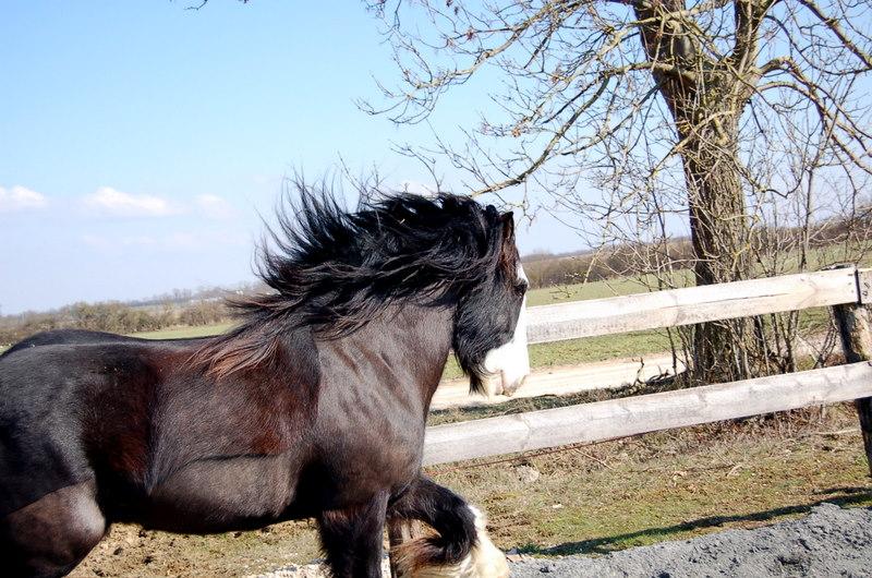 William: c'est la fête du cheveu !!! :) 2010_025