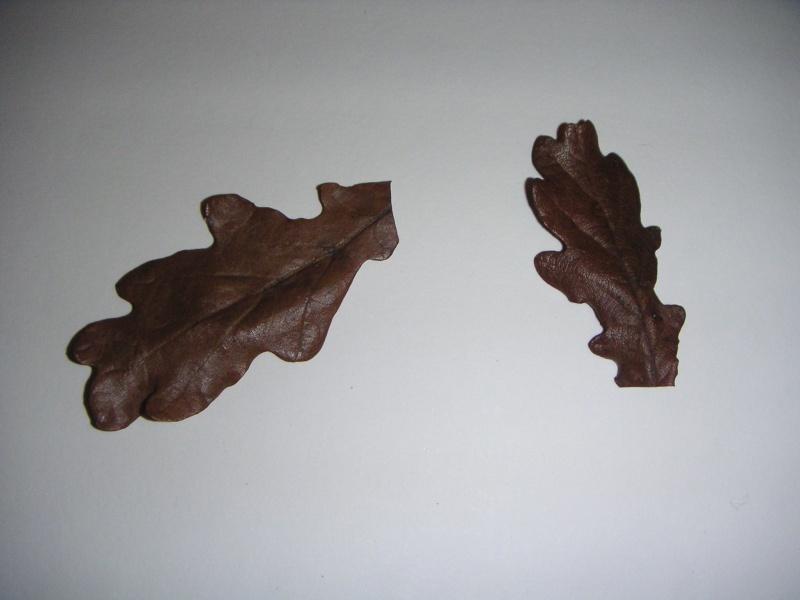 vieille feuille de chêne(risque de champignon dans l'eau?) Pict0011