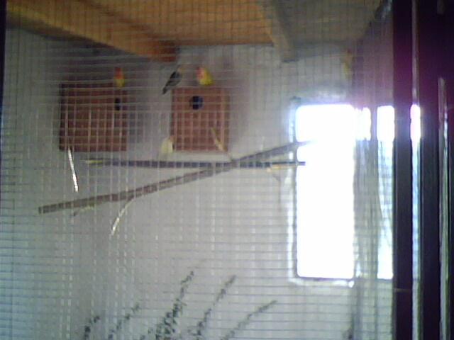 Moje ptice Img00510