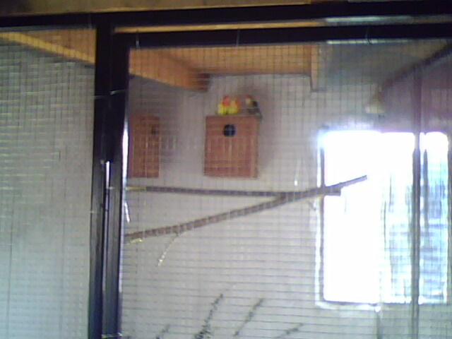 Moje ptice Img00511