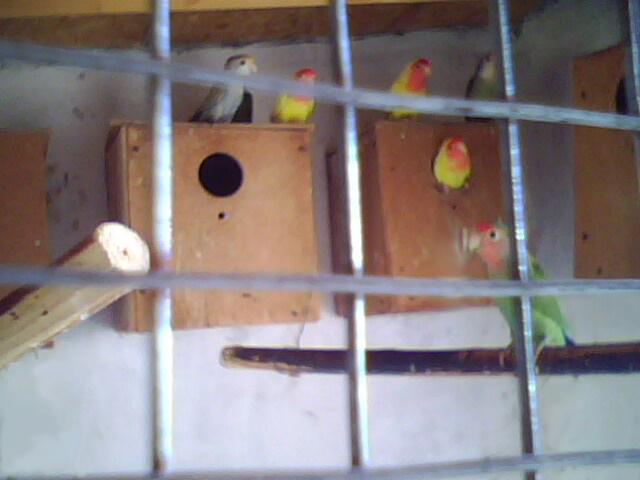 Moje ptice Img00611