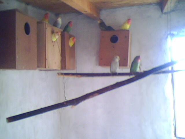 Moje ptice Img00711