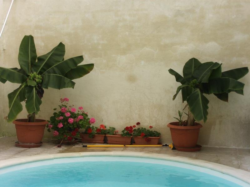 olivia avec escawat veranda sur mesure File0027