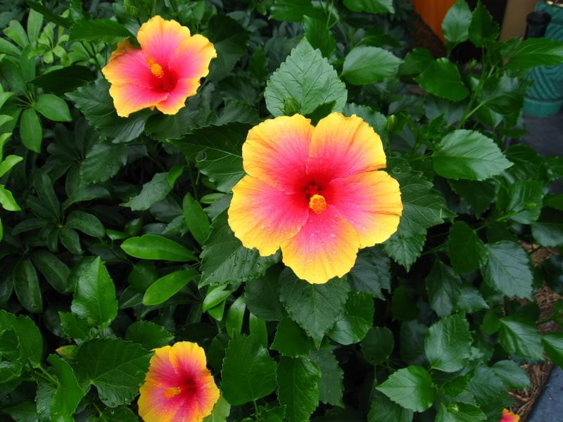 Poly vids! Flower15