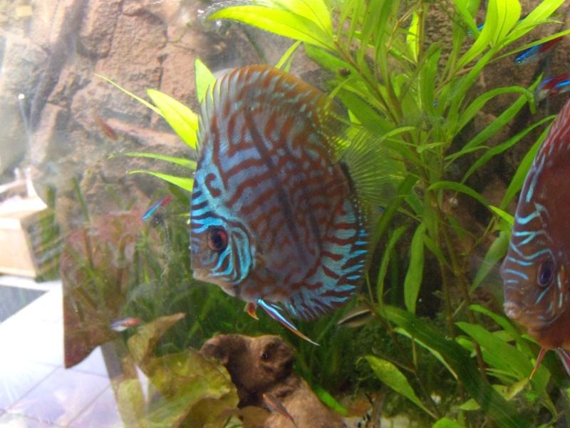 evolution turquoise bleu brillant Dscn0911