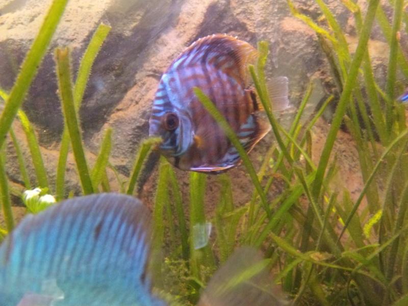 evolution turquoise bleu brillant Turquo10