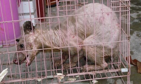 Créature mystérieuse en Chine Chinam10