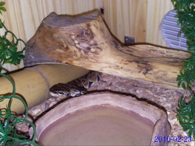 Comment organiser un terra pour un python régius? Pict0041