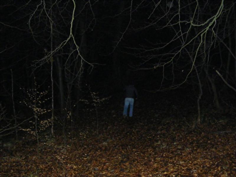 Rannock woods part 2 2009_011