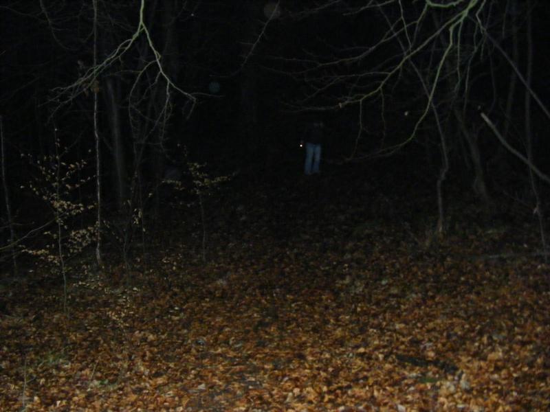 Rannock woods part 2 2009_012