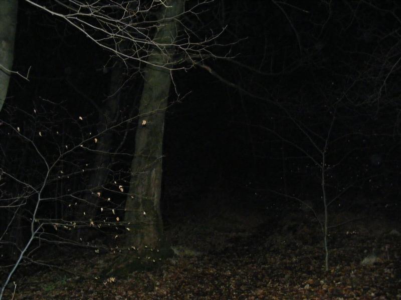 Rannock woods part 2 2009_013
