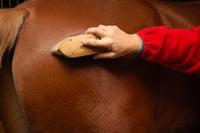 Cavalo: Limpeza e cuidados higiénicos 110