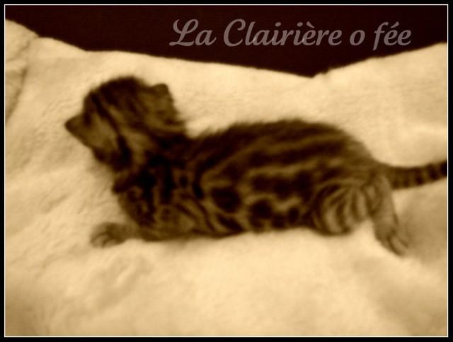 Chatterie La Clairière O Fée - Page 2 Dsc00510