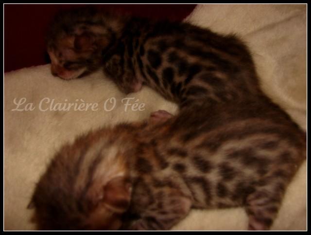 Chatterie La Clairière O Fée - Page 2 Dsc00611