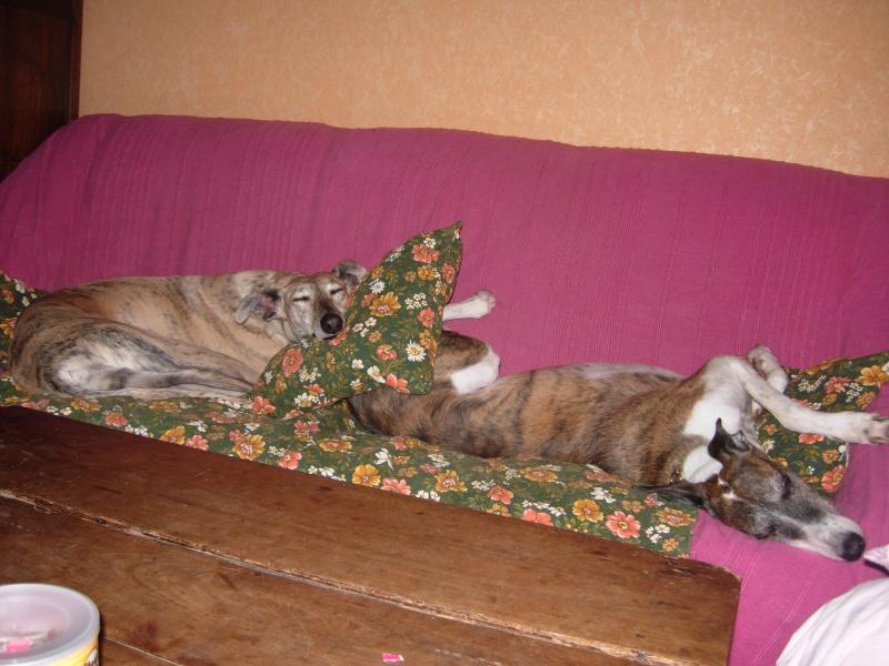 Posture originale pour dormir....et chez vous c'est comment??? 00310