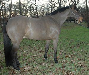Commencer une partie sur Horse Life Hanovr10