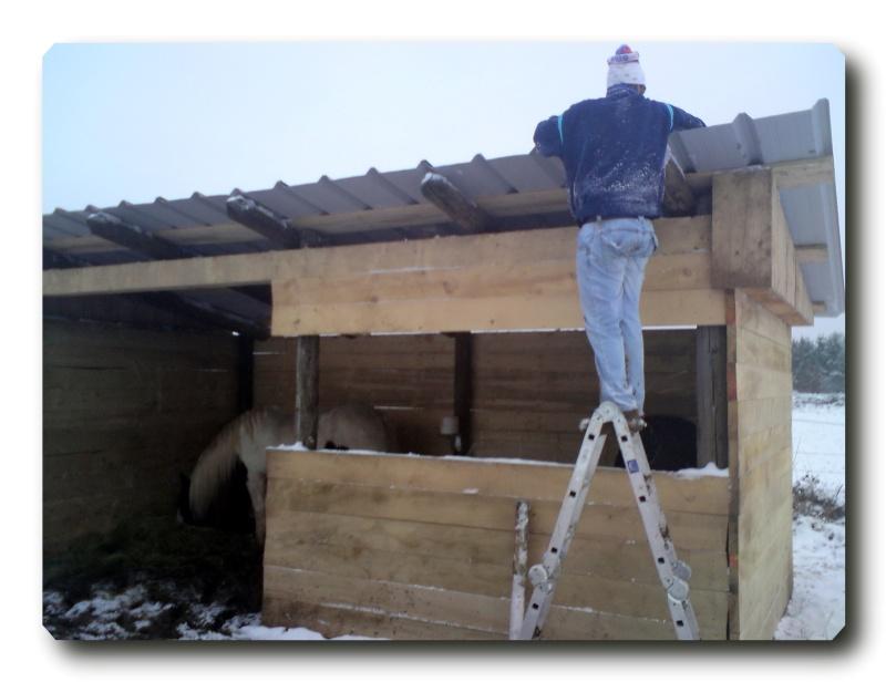 Construction d un abris pour Jack et Maggy...enfin terminé le 27/11 Dsc00817