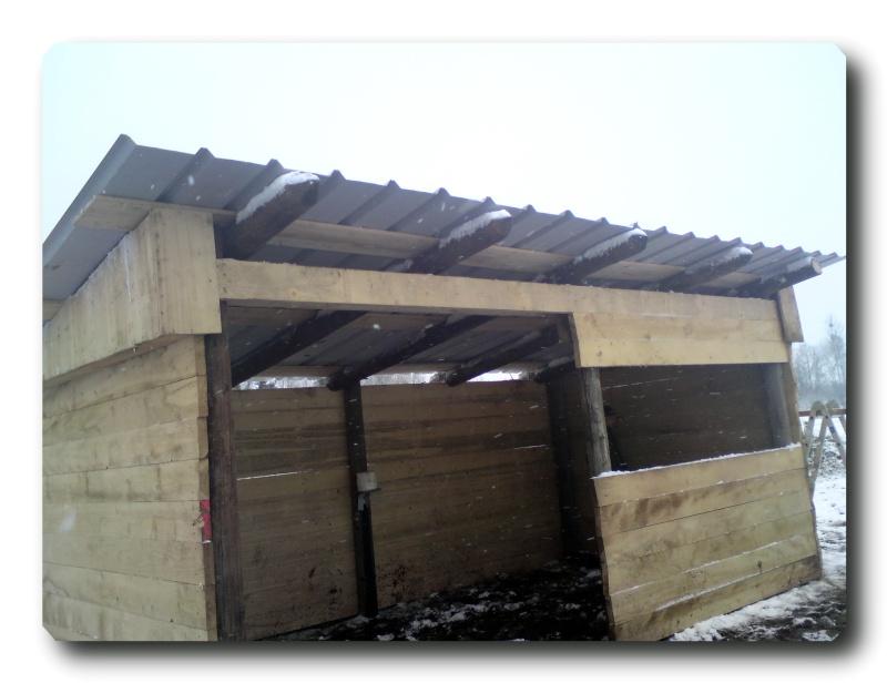 Construction d un abris pour Jack et Maggy...enfin terminé le 27/11 Dsc00818