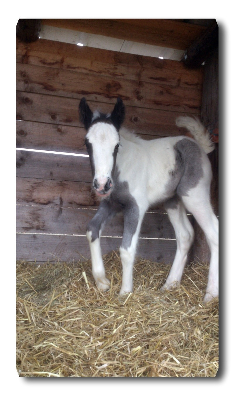 La fille de Maggy et Gitan : Droopy est née  07 avril 2013 Dsc_5814