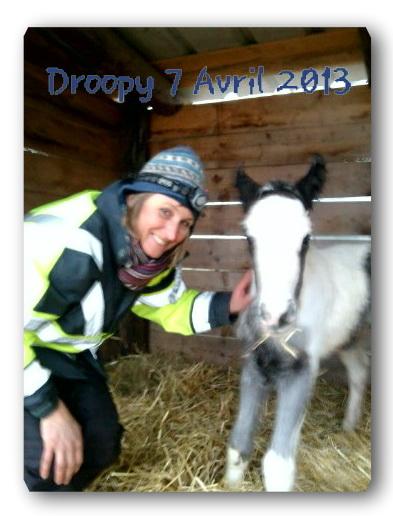 La fille de Maggy et Gitan : Droopy est née  07 avril 2013 Nath_e10