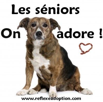 Nouveau !! Stikers !!!  Senior10