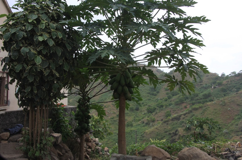 """Petit tour au Cap Vert """"Cabo Verdé"""" Img_3213"""