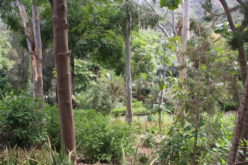 """Petit tour au Cap Vert """"Cabo Verdé"""" Img_3229"""