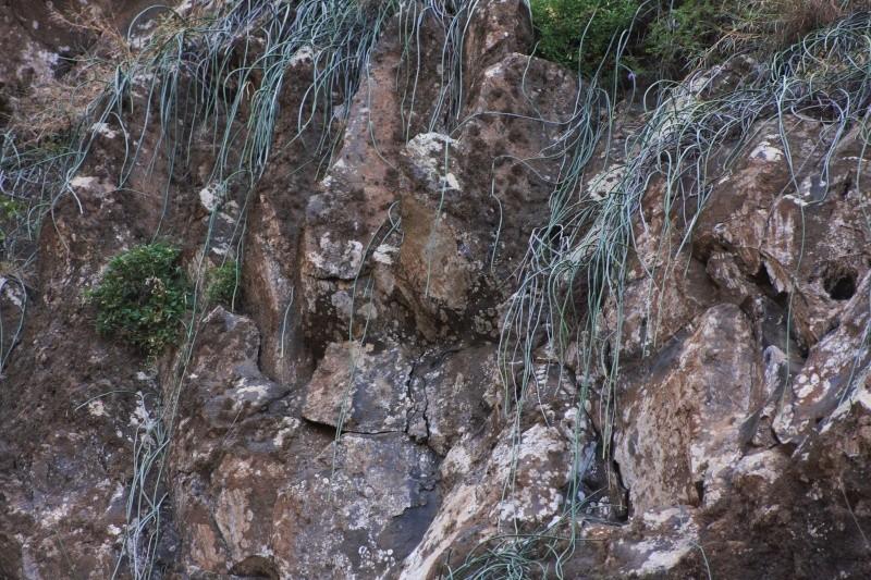 """Petit tour au Cap Vert """"Cabo Verdé"""" - Page 3 Img_4027"""