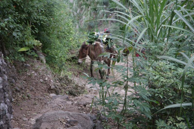 """Petit tour au Cap Vert """"Cabo Verdé"""" - Page 3 Img_4124"""