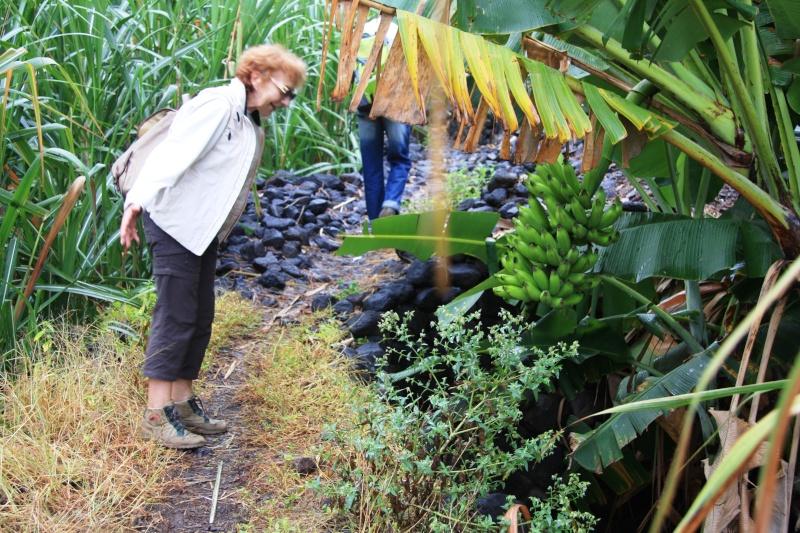 """Petit tour au Cap Vert """"Cabo Verdé"""" - Page 3 Img_4244"""