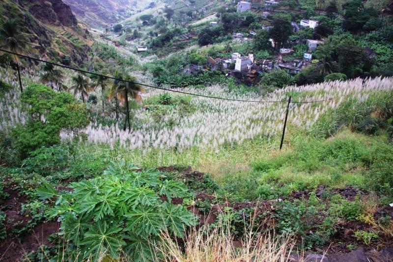 """Petit tour au Cap Vert """"Cabo Verdé"""" - Page 3 Img_4325"""