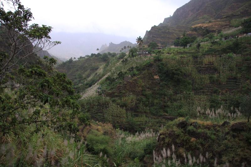 """Petit tour au Cap Vert """"Cabo Verdé"""" - Page 3 Img_4344"""