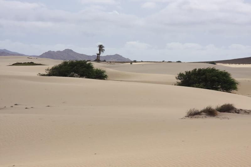 """Petit tour au Cap Vert """"Cabo Verdé"""" - Page 4 Img_4627"""