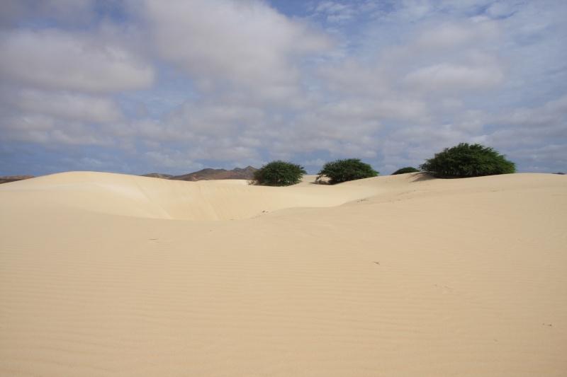 """Petit tour au Cap Vert """"Cabo Verdé"""" - Page 4 Img_4628"""