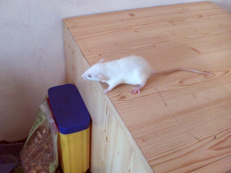 bébés de maya (news photos p.64/65) Dsc_0100
