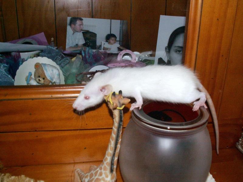 bébés de maya (news photos p.64/65) - Page 5 Pict0083