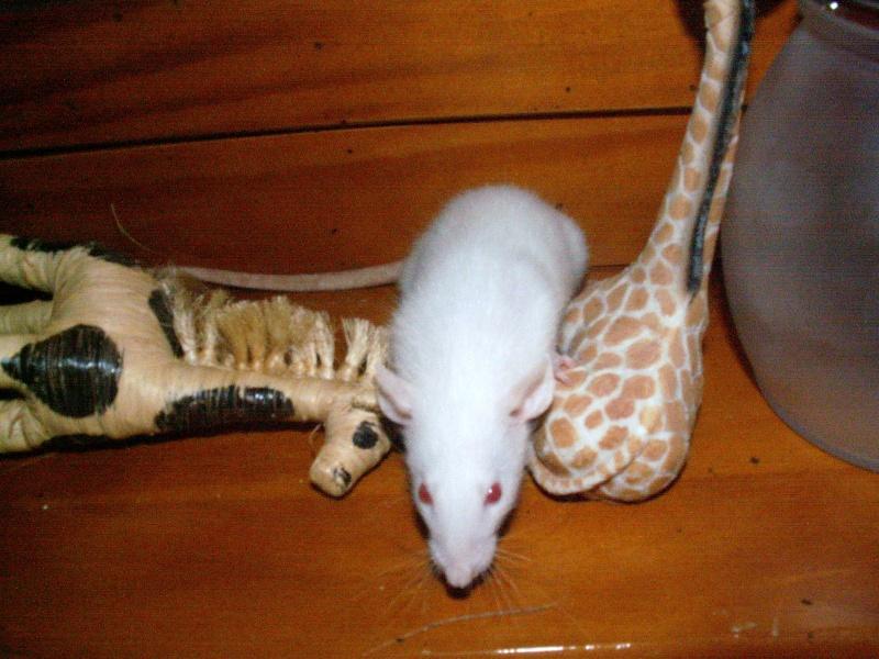 bébés de maya (news photos p.64/65) - Page 5 Pict0085