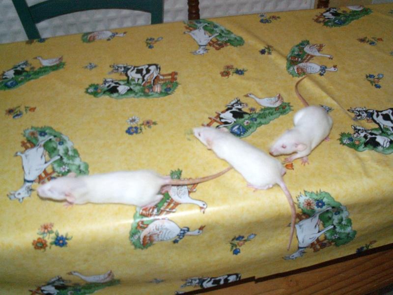 bébés de maya (news photos p.64/65) - Page 6 Pict0128